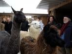 Einweihungsfeier Lamas | 07