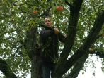Apfelernte 2013