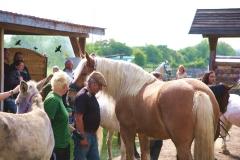 Tiersegnungsgottesdienst  auf dem Storchenhof